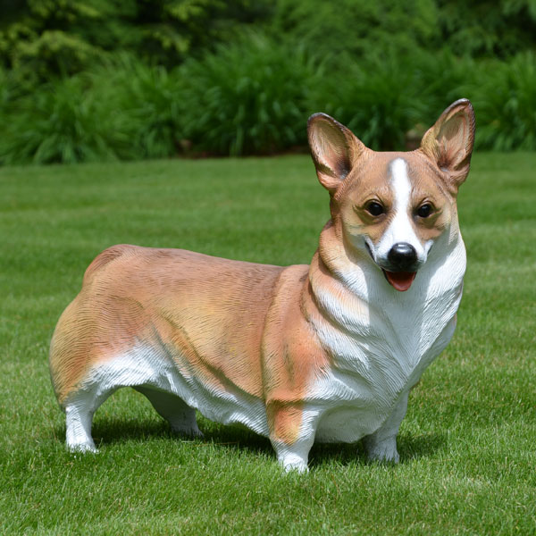 Corgi Dog Breed Price