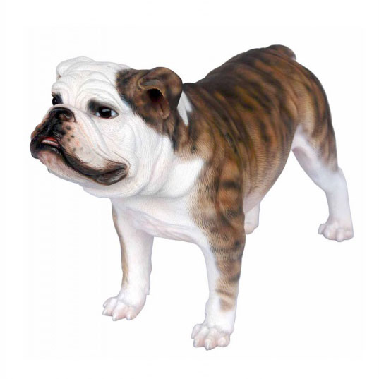 Brindle Bulldog