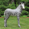 "View: Life Size Zebra Foal 43.5""H"