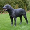 "View: Life Size Black Labrador Dog Statue 30""H"