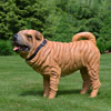 "View: Life Size Shar-Pei Dog Statue 26""H"