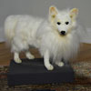 "View: German Spitz 14""H from Hansa"