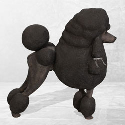 Life Size Poodle